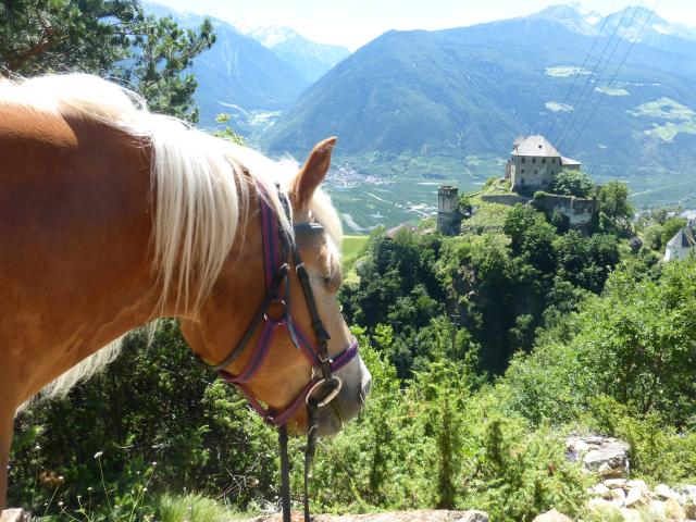 Ausritt Südtirol 2